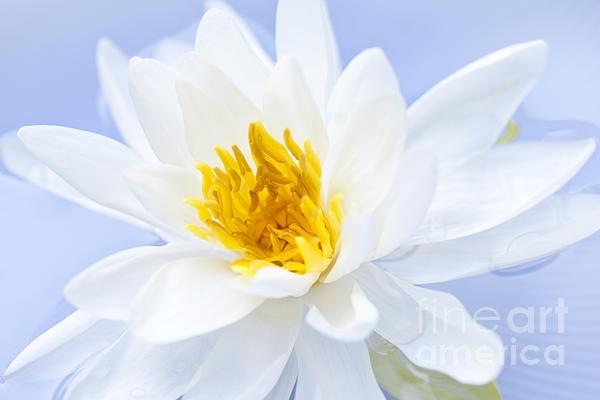 Lotus Photograph - Lotus Flower by Elena Elisseeva
