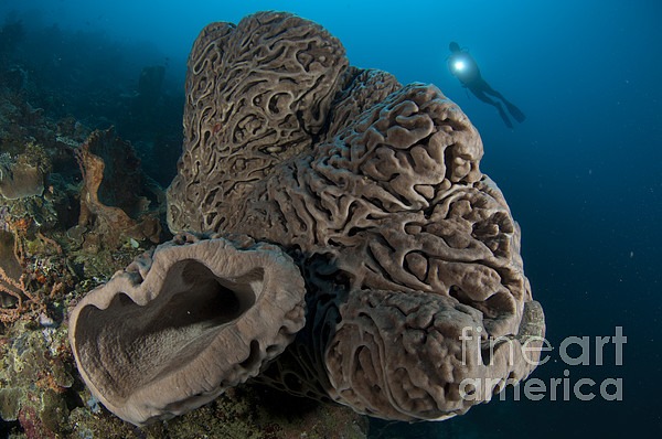 Invertebrate Photograph - The Salvador Dali Sponge With Intricate by Steve Jones