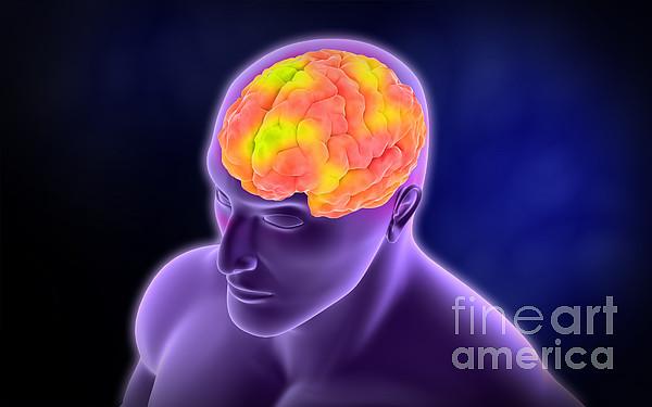 Horizontal Digital Art - Conceptual Image Of Human Brain by Stocktrek Images