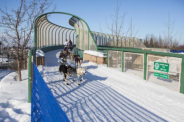 Aaron Burmeister Photograph - A Bridge In The Iditarod  by Tim Grams
