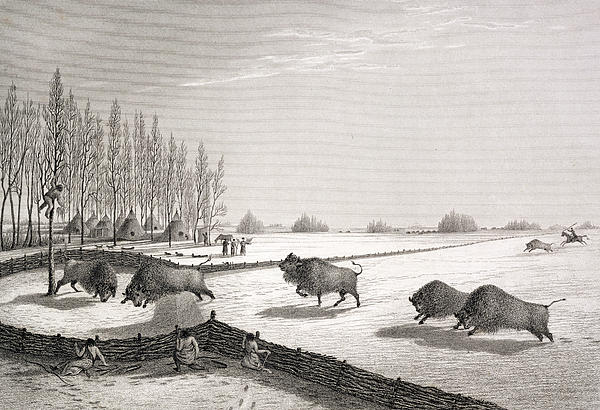 Snow Drawing - A Buffalo Pound by George Back