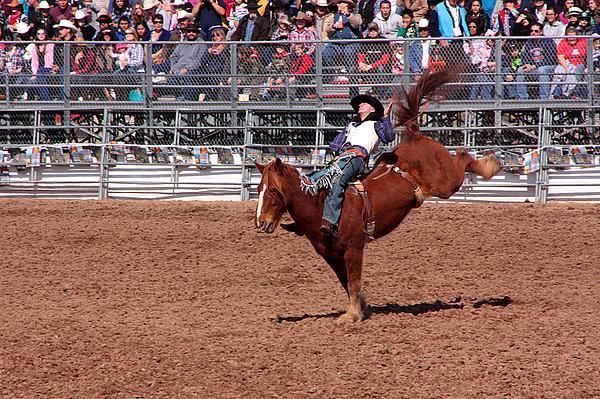 Rodeo. Rodeos Photograph - A Bumpy Ride by Joe Kozlowski