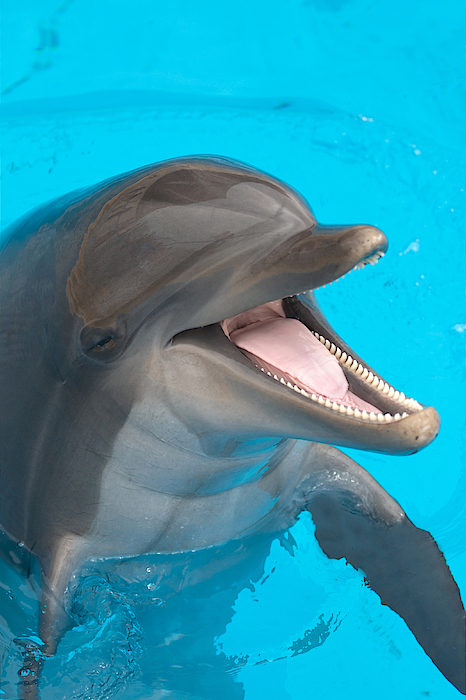 A Close-up Of A Happy Dolphin Swimming Photograph by To_csa