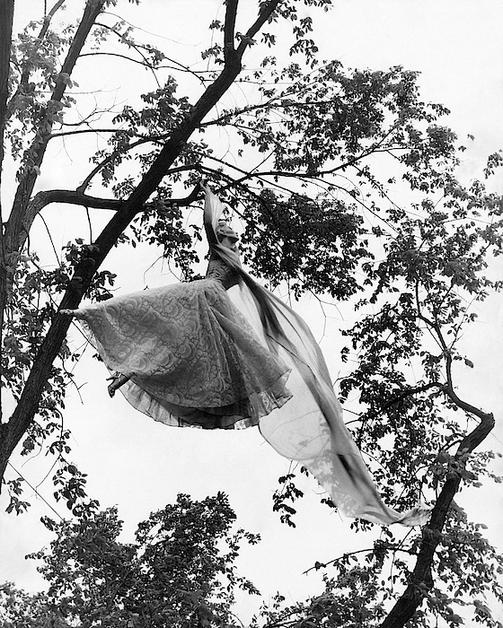 A Model Wearing A Dress In A Tree Photograph by Gene Moore