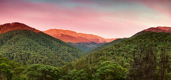 Mt Bogong Photograph - A Natural Highlight by Mark Lucey