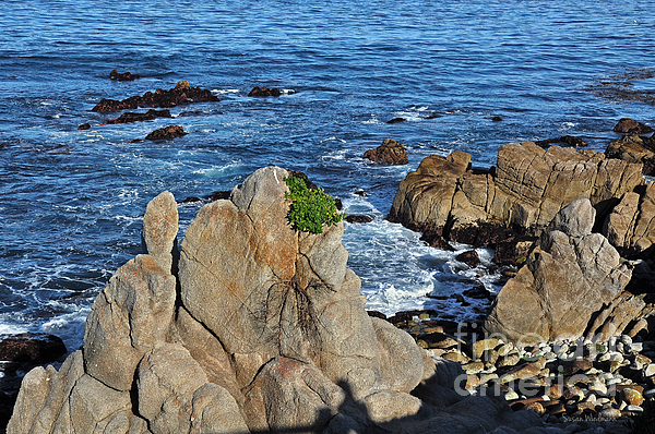 Seascape Photograph - A Plant Grows On Ancient Seaside Rocks by Susan Wiedmann