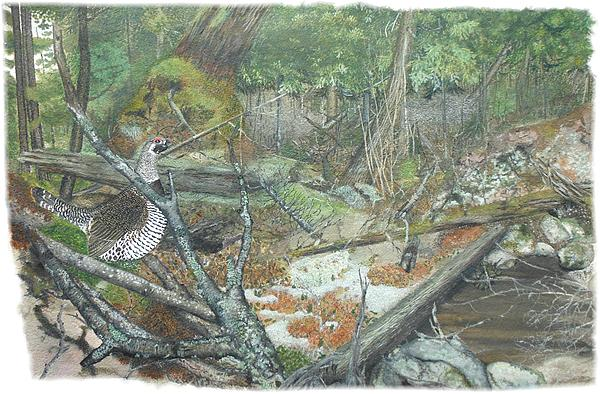 Spruce Grouse Painting - A Spruce Grouse Comes Promenading by Tanya  Beyer