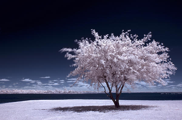 Blue Photograph - A Winter Summer by Mike Irwin