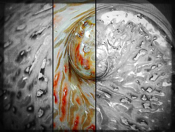 Balance Photograph - Abalone by Bettina Clark