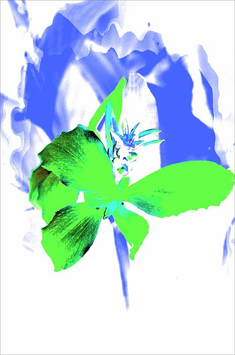Green Flower Photograph - Abstract Green by Cathie Tyler