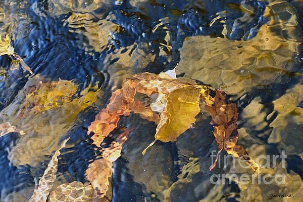Fall Scenes Photograph - Abstract Leaves In Water by Dan Friend
