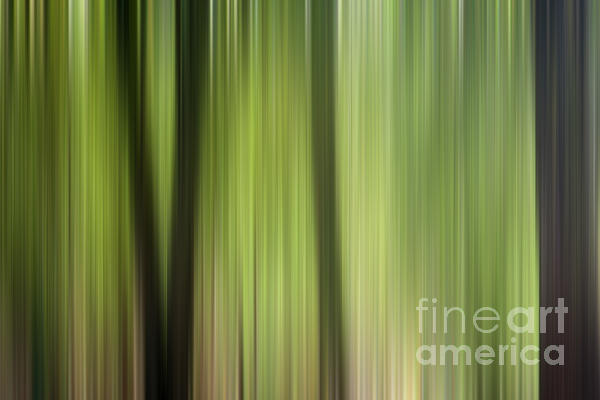 Abstract Trees In The Forest Photograph by Natalie Kinnear
