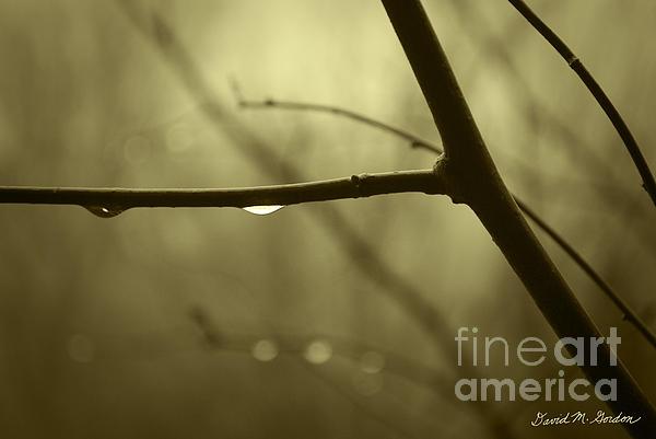 Rain Photograph - After It Rained by David Gordon