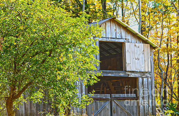 Barn Photograph - Afternoon Delight by A New Focus Photography
