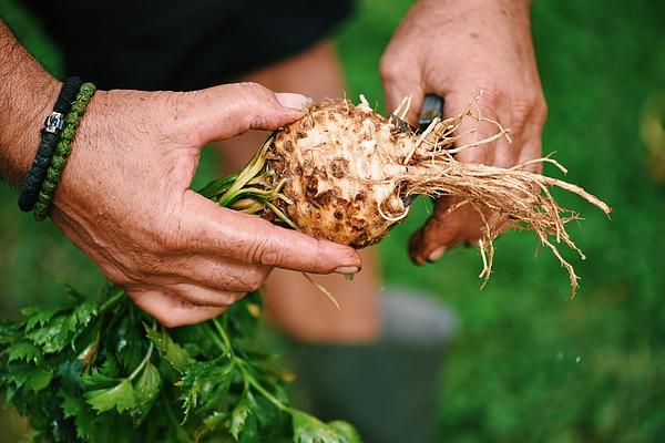 Agriculture Photograph by Emilija Manevska