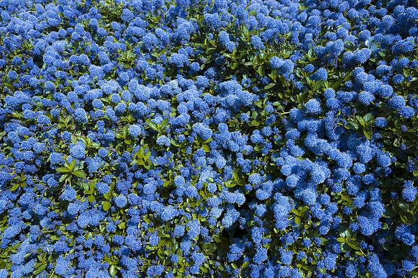 Anniversary Photograph - All Blue by Svetlana Sewell