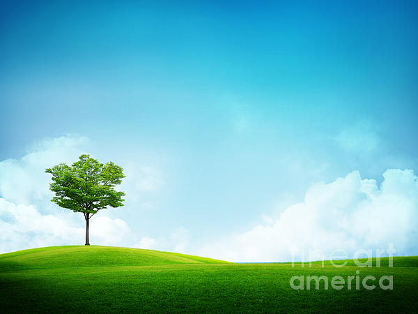 Alone Photograph - Alone Tree by Boon Mee
