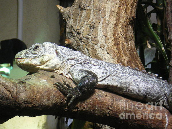 Reptile Photograph - Am A Reptile. by Ann Fellows