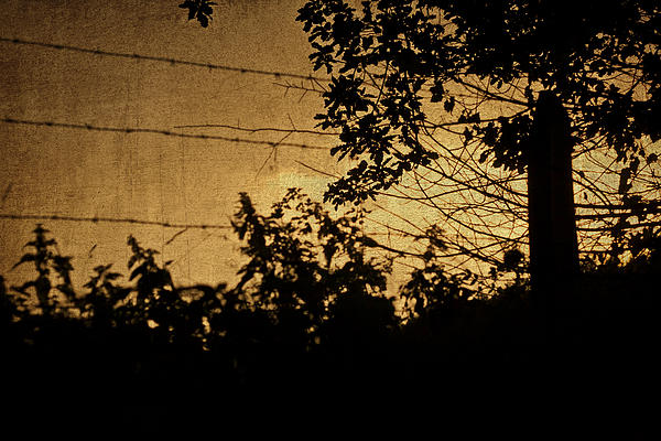 Sunset Silhouette Photograph - And Then The Night Comes by Georgia Fowler