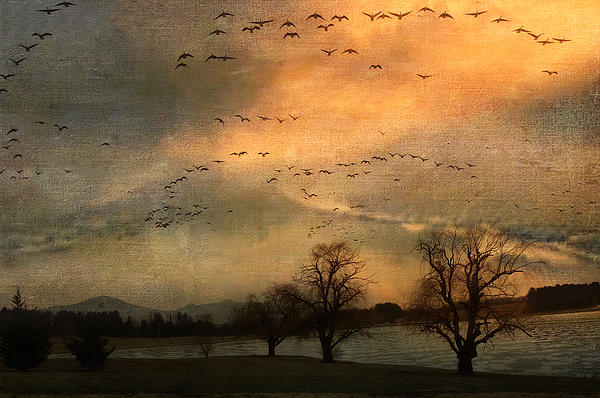 Birds Photograph - And They Flew Away by Kathy Jennings