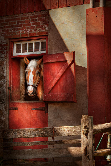 Calvin Photograph - Animal - Horse - Calvins House  by Mike Savad