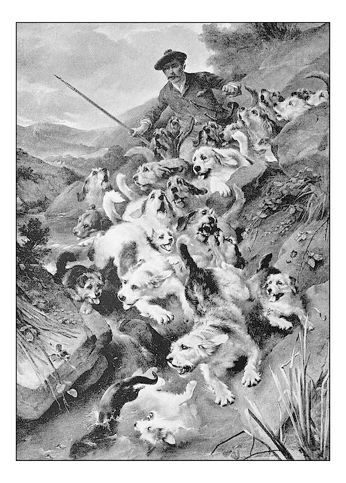 Antique Photo Of Paintings: Bolting The Otter Drawing by Ilbusca