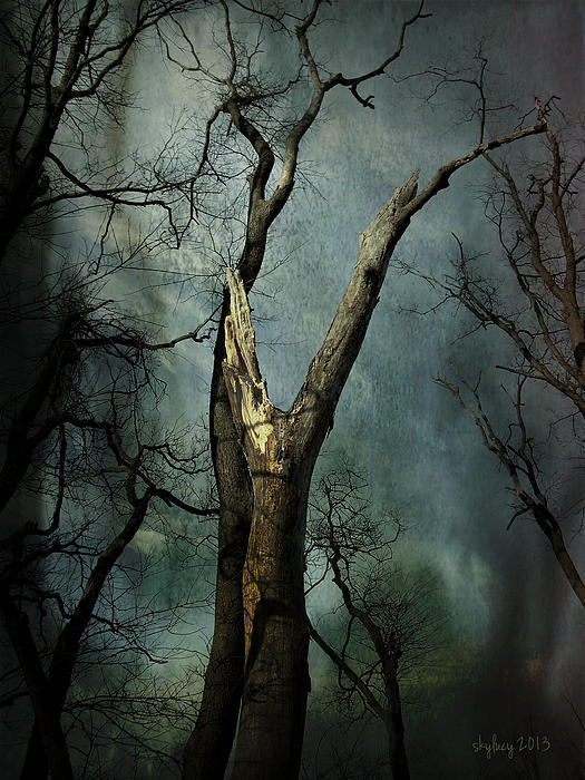 Tree Photograph - Appeal To The Sky by Cynthia Lassiter
