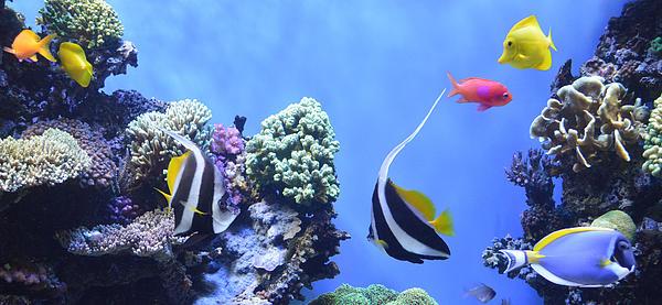 Aquarium 5 Digital Art - Aquarium 5 by Barbara Snyder