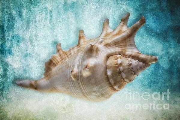 Mollusc Photograph - Aquatic Dreams I by George Oze