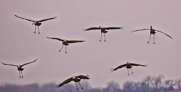 Cranes Photograph - Are You Sure This Is The Spot by Don Schwartz
