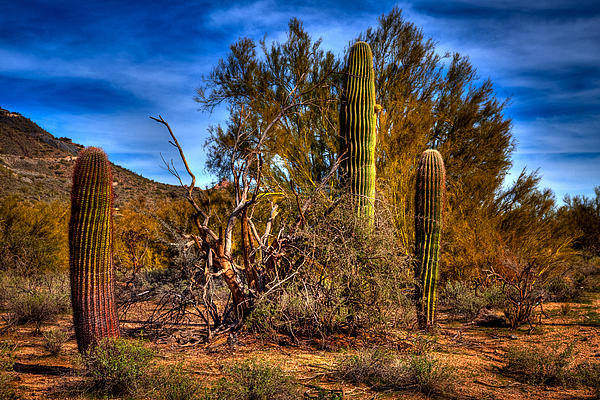 Cactus Photograph - Arizona Landscape II by David Patterson