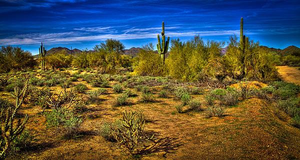 Cactus Photograph - Arizona Landscape Iv by David Patterson