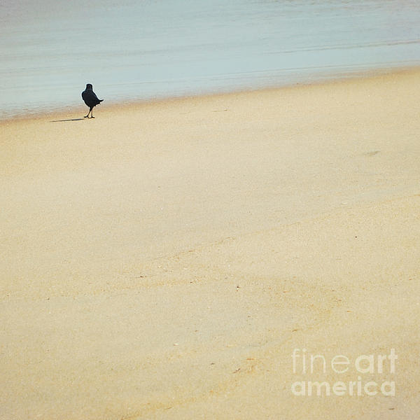 Crow Photograph - As I Wander by Sharon Coty