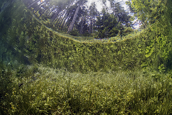Austria, Styria, Tragoess, Upward View Under Water At The Green Lake Photograph by Westend61