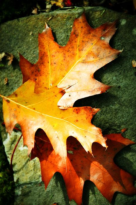 Autumn Photograph - Autumn Blaze by JAMART Photography