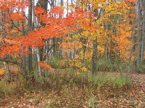 Autumn Photograph - Autumn Golds by Margaret McDermott
