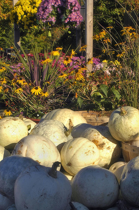 Harvest Photograph - Autumn Gourds by Joann Vitali