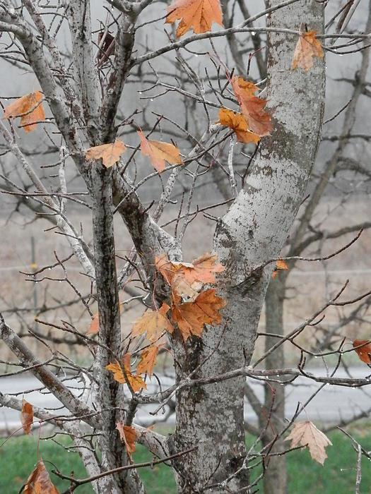 Autumn Photograph - Autumn Grey by Margaret McDermott