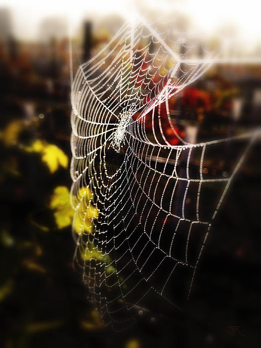 Web Photograph - Autumn Web by John Monteath