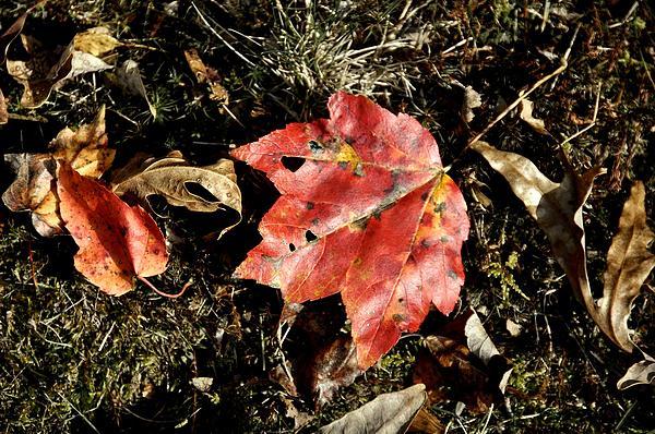 Autumn Photograph - Autumns End by JAMART Photography