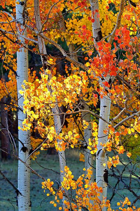 Autumn Colors Photograph - Autumns Fire by Jim Garrison
