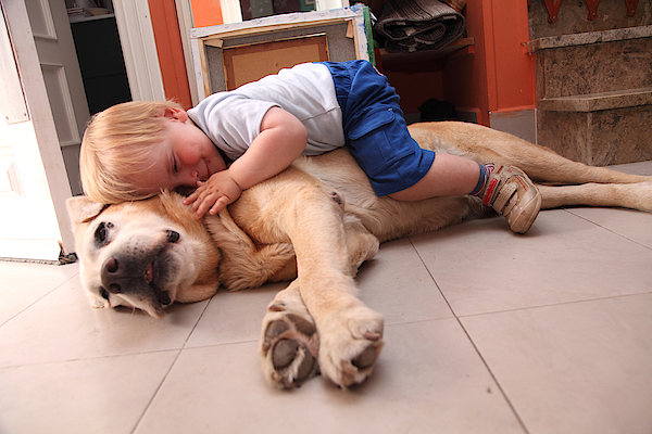 Baby On A Dog, Cares About Dog Photograph by Aitor Diago