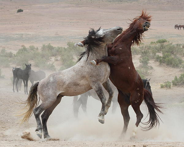Horse Photograph - Back Off by Gene Praag