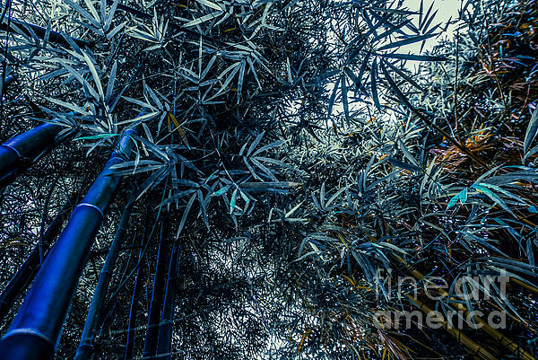 Asia Photograph - Bamboo - Blue by Hannes Cmarits