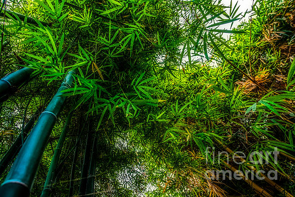 Asia Photograph - bamboo III - green by Hannes Cmarits