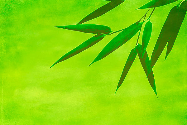 Asia Photograph - Bamboo Leaves by Hannes Cmarits
