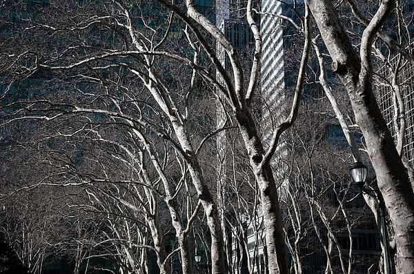 Bare Trees Photograph - Bare by Joanna Madloch