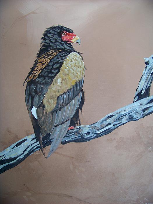 Bateleur Painting - Bateleur by Robert Teeling