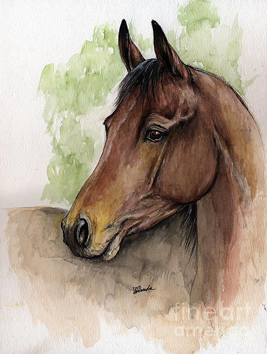 Horse Painting - Bay Horse Portrait Watercolor Painting 02 2013 A by Angel  Tarantella