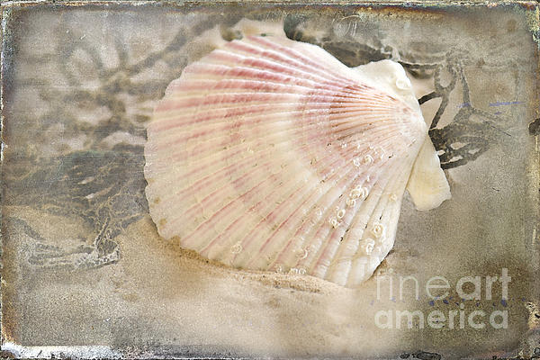 Seashell Photograph - Beached by Betty LaRue